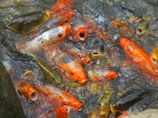 Mondo Verde: Fütterung der Raubtiere