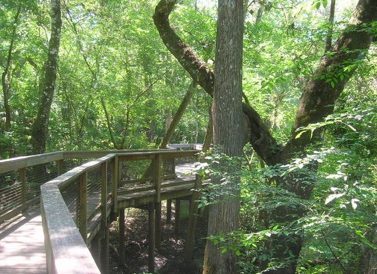 Hillsborough River State Park: A bord walk across a deep gully.