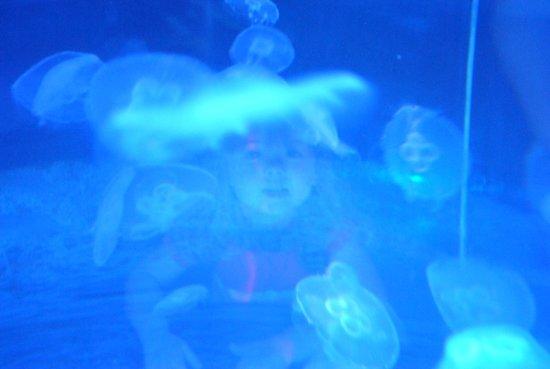 Scarborough SEA LIFE Sanctuary: My daughter through the jellyfish