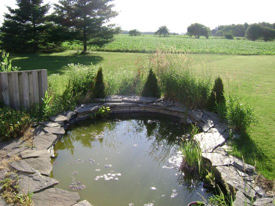At Your Witt's End: Pond