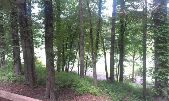 Springmaid Mountain : View from back Porch - horse pasture and river on the opposite of that patch of trees