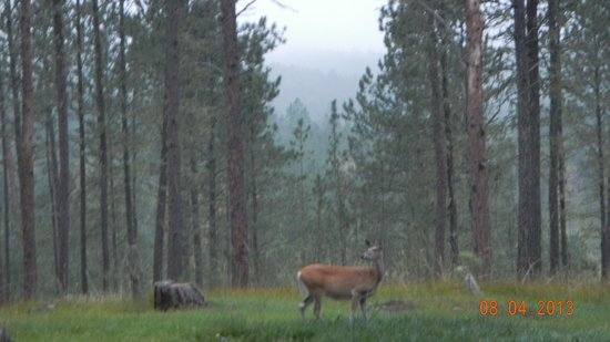 Big Pine Campground: Deer right behind our site
