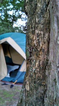 Camping at bruin lake - Picture of Pinckney Recreation Area-Crooked