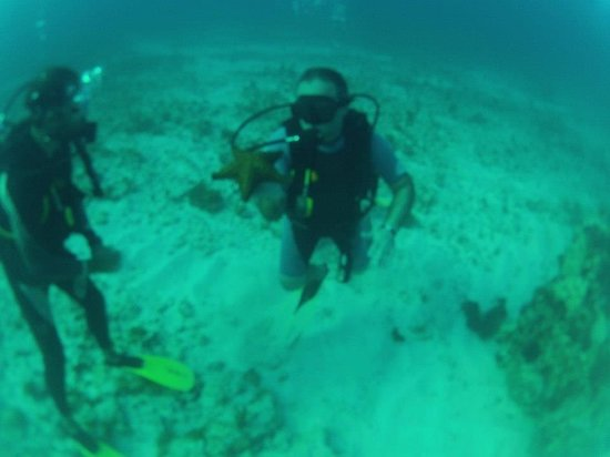 Always Diving & Water Sports: underwater life