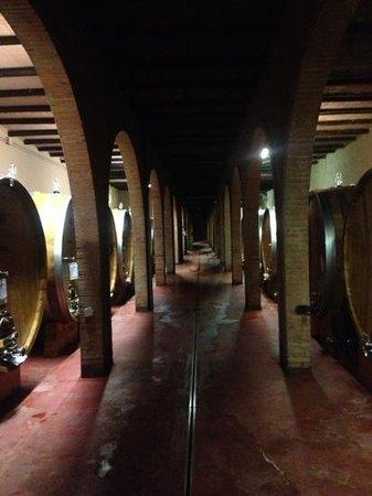 Dievole: The Wine Cellar