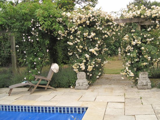 The Old Rectory: Roses by the pool