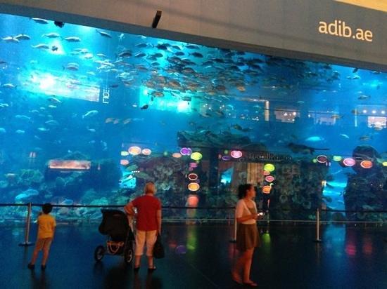 dubai mall aquarium - Picture of Dubai Shopping Centre ...