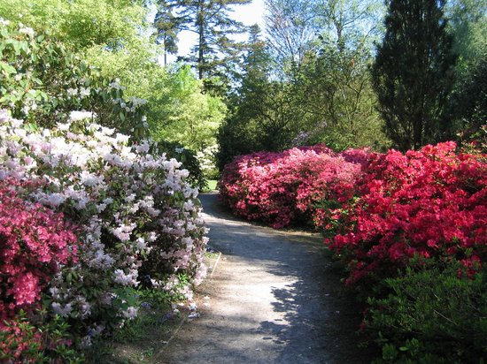 Tilgate Park in May