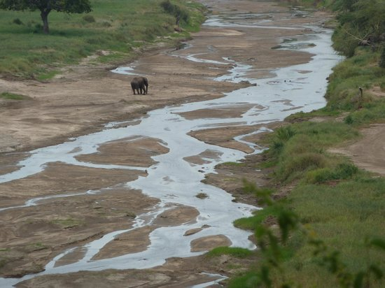 Lake Burunge Tented Camp : One lone elephant