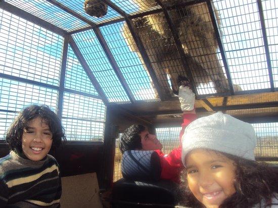 Parque Safari: Dentro da jaula (carro)