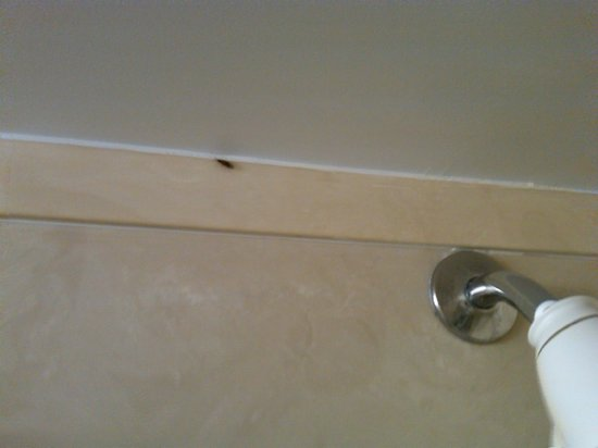 Holiday Inn Express & Suites Duluth - Mall Area : These are a few of the roaches which were present #1