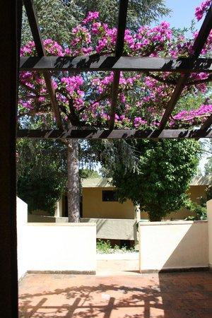 Villaggio Club La Feluca: La terrazza della camera