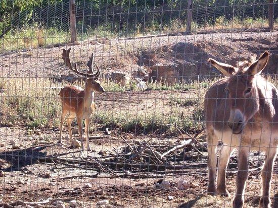 Logis Domaine de Roquerousse : che sorpesa gli animali!