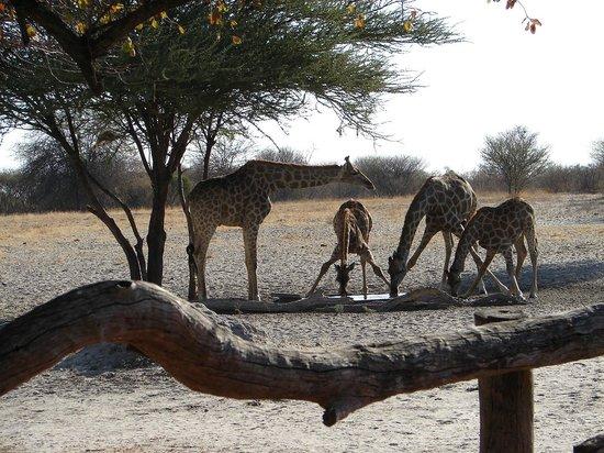 Haina Kalahari Lodge: Pozo de agua