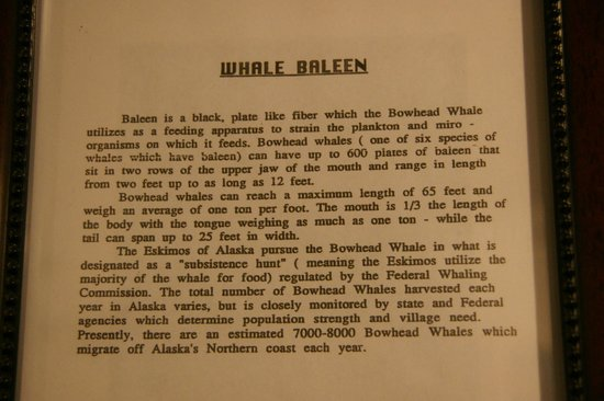 Broiler: About whales