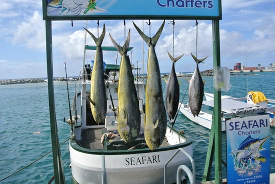 Seafari Fishing Charters: Great catch