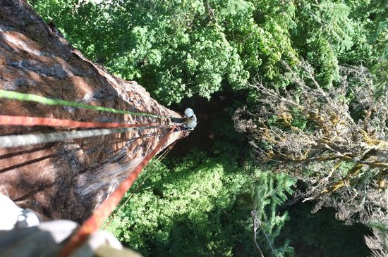 Pacific Tree Climbing Institute : Looking down from somewhere on the tree