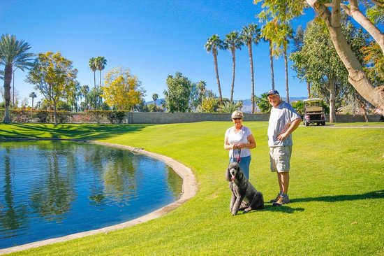 Emerald Desert RV Resort: Pet Friendly
