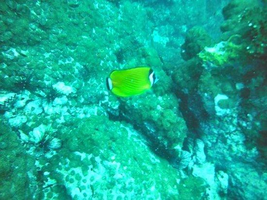 Haad Yao Divers : Sail Rock