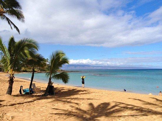 Napili Kai Beach Resort : View of the beach