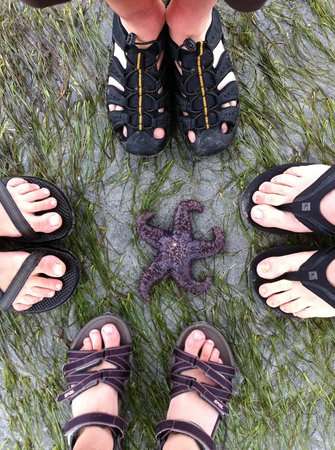 ELES ESCAPE B&B by the SEA: Beachfeet
