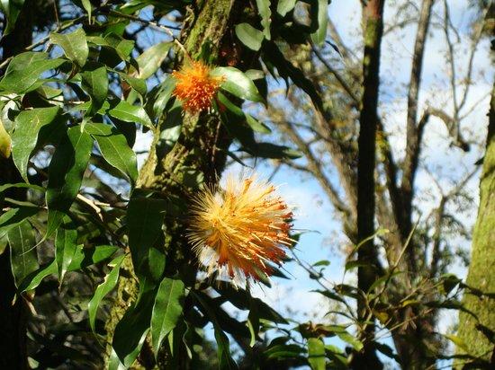 Parque das Aguas: Matizes cloridos das flores