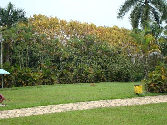 Parque das Aguas: Árvores que bailam com o vento.