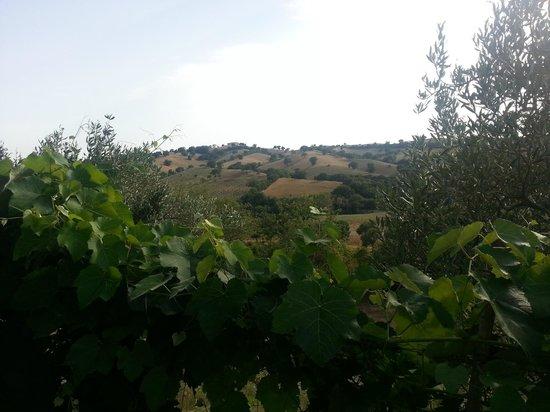 Podere Santa Teresa: One of the many views.....
