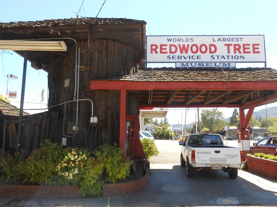 """World""""s Largest Redwood Tree Service Station: 800 block of N. State St."""