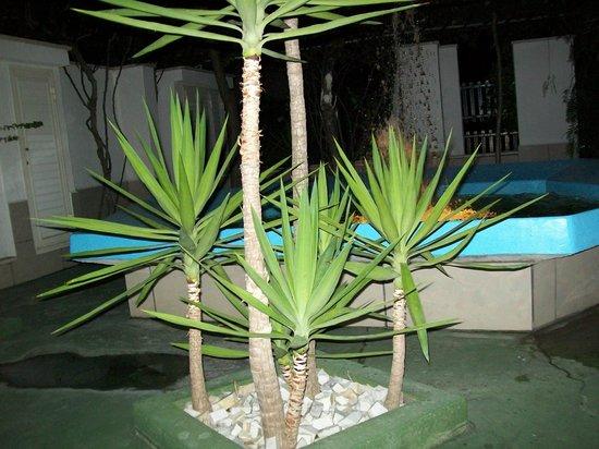 Hotel Atena: Un angolo del giardino dell'hotel