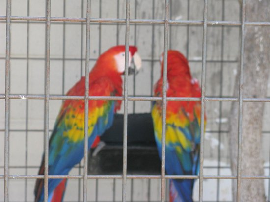 Animal World and Snake Farm Zoo: They have several kinds of birds.