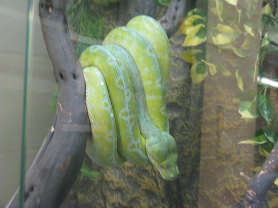 Animal World and Snake Farm Zoo: Snakes were easy to see.