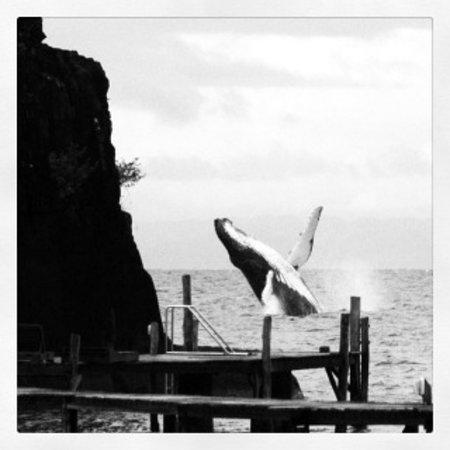 Hotel Libertalia: the whale à 30m