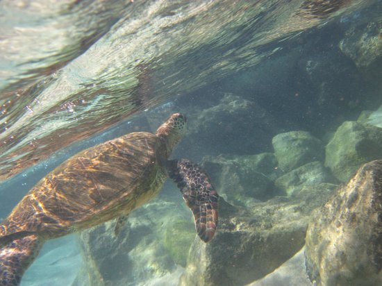 Ka'anapali Beach: Swimming with the sea turtles