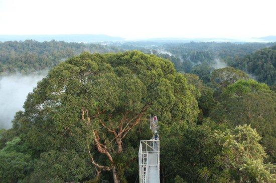 Ulu Ulu National Park Resort: Canopy Walk