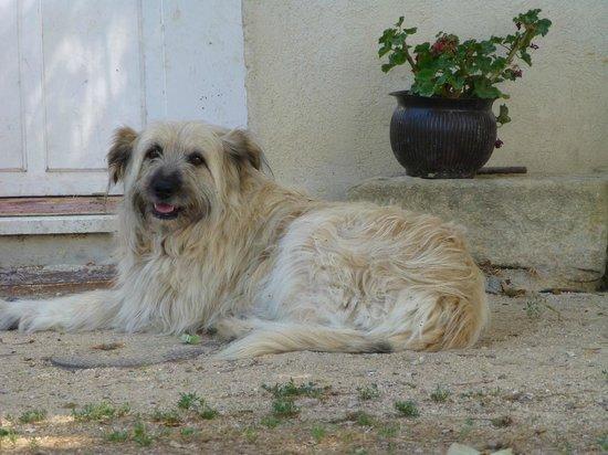 Réal Plantain : chien des propriétaires
