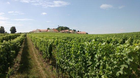 Vinarstvi U Kaplicky - in the vineyards