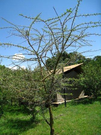 Olumara Camp: camp