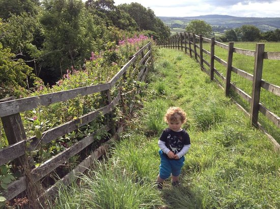 Pickersgill Manor Farm Bed and Breakfast: a stroll in the grounds