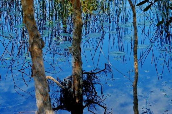 Noosa North Shore Retreat: lovely dam