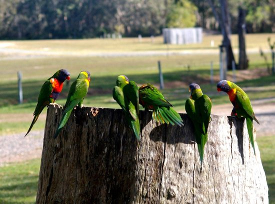 Noosa North Shore Retreat: the locals come in to say high