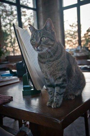 La Tavola dei Cavalieri: il gattino