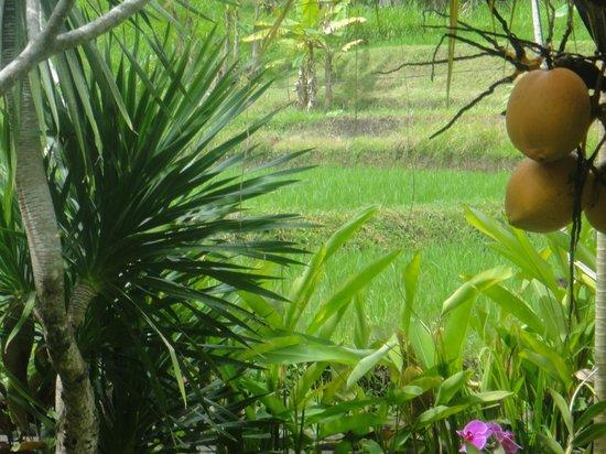 Yeh Pulu Cafe : Lovely garden