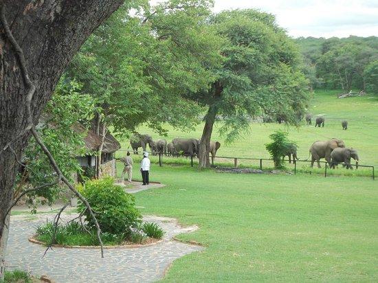 Hwange Safari Lodge: View from room