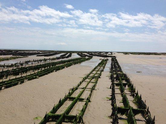 Résidence de France : Oysters as far as the eye can see