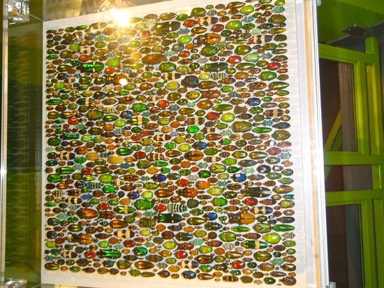 Insectarium de Montréal : Colorful Beetle Collection...not the VW variety either.
