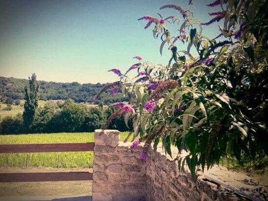 Domaine Du Bas Chalus : vue depuis la piscine