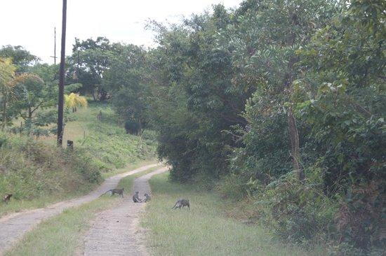 Hamilton Parks Country Lodge: Animais pela estrada