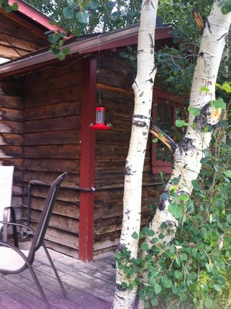 Mount Elbert Lodge: Three hummingbirds enjoying our feeder