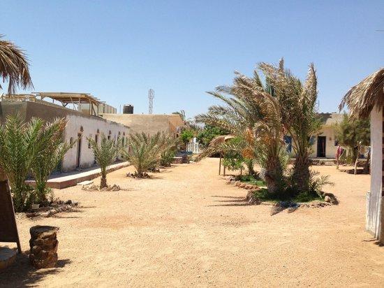 Desert Divers Dahab: Marine Gardens
